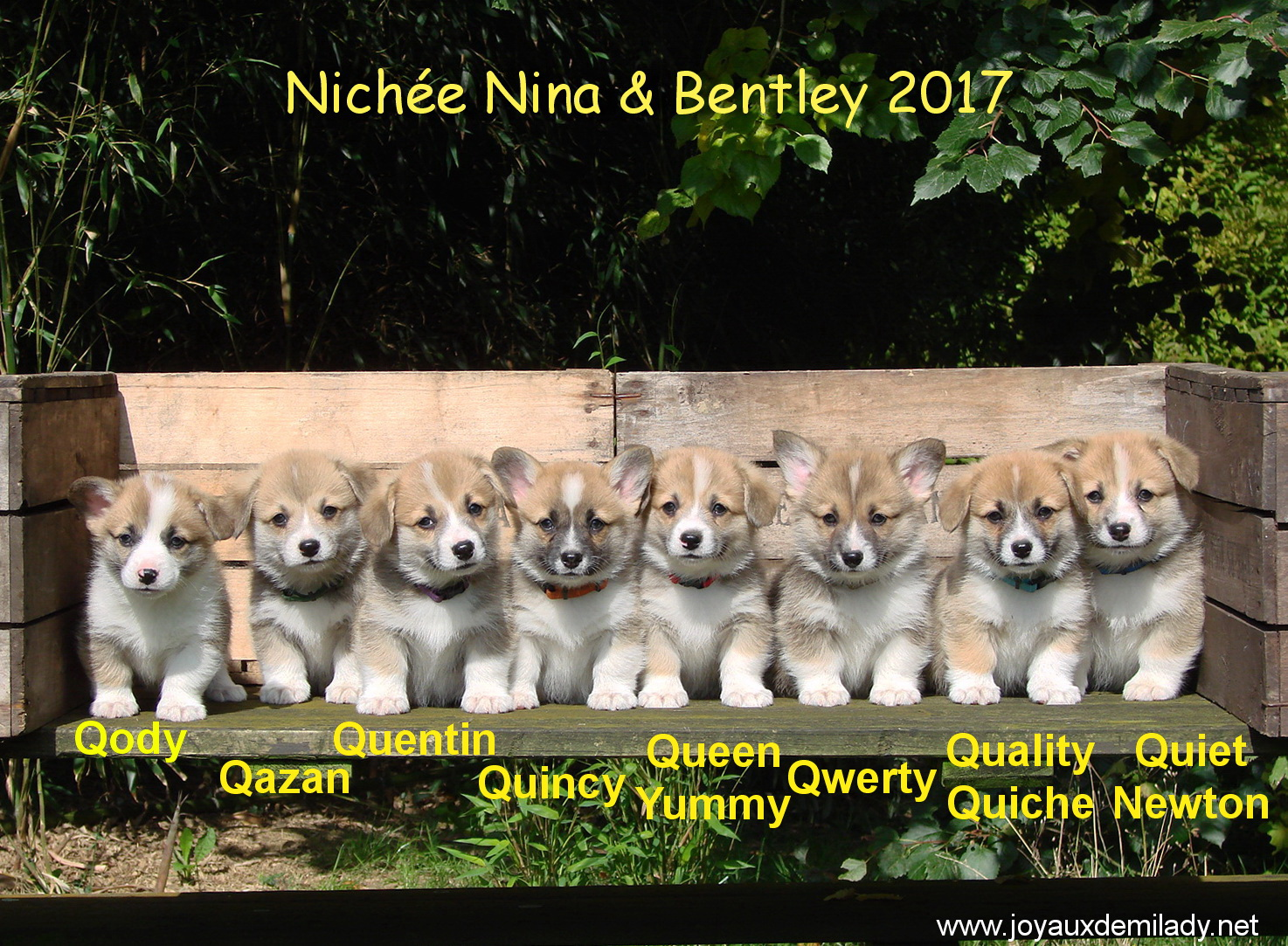 chiots 6 semaines
